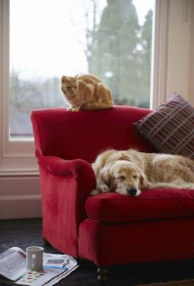 Picture of a cat and dog on a red sofa