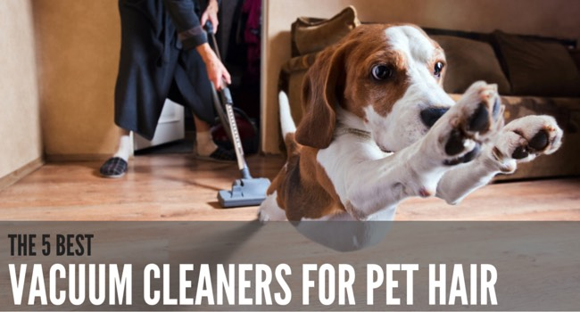 main image displaying the heading the best hoovers for pet hair